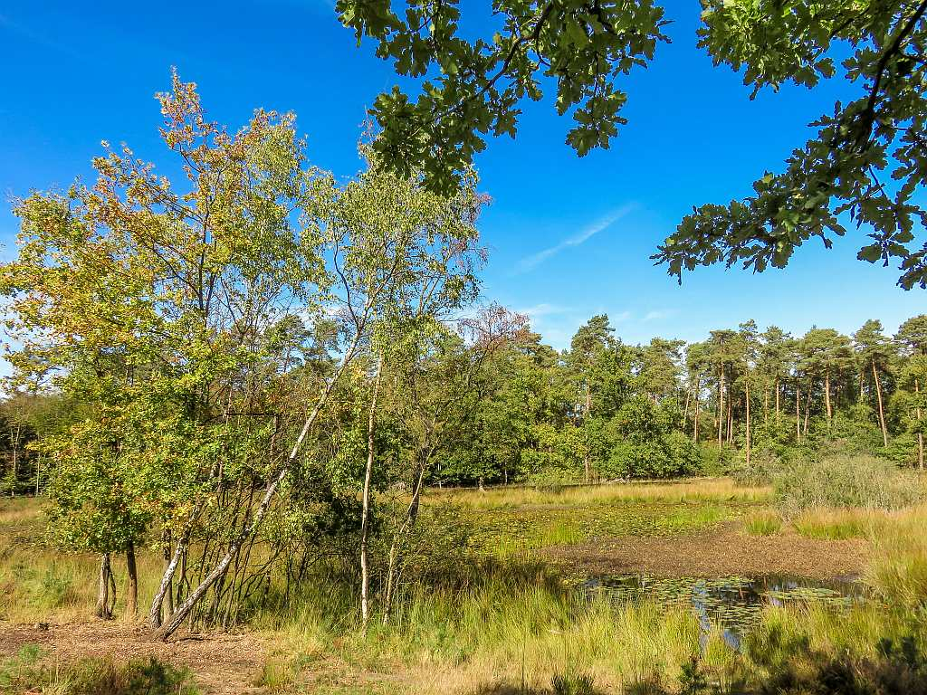 a marsh surrounded by green trees and blue sky above, De Meinweg National park in the Netherlands