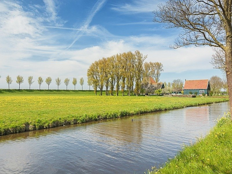 small green trees along an invisible road, canal with water and a few farmhouses, UNESCO Beemster polder in the Netherlands
